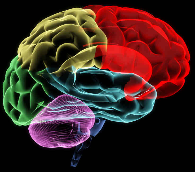 Brain Science Explains How Your Logo Works
